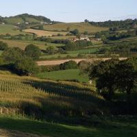From bettiscombe