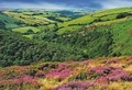 High exmoor mini