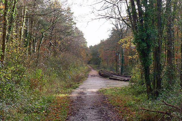 P1020816 thurlbear woods